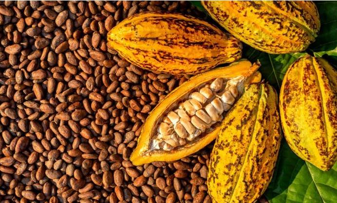 Ghana's Cocoa
