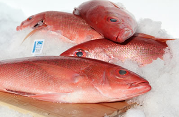 Ghana Fish Ban